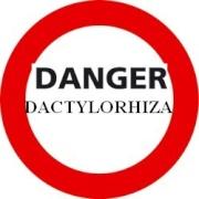 Les Dactylorhiza. Un essai de présentation. 675176